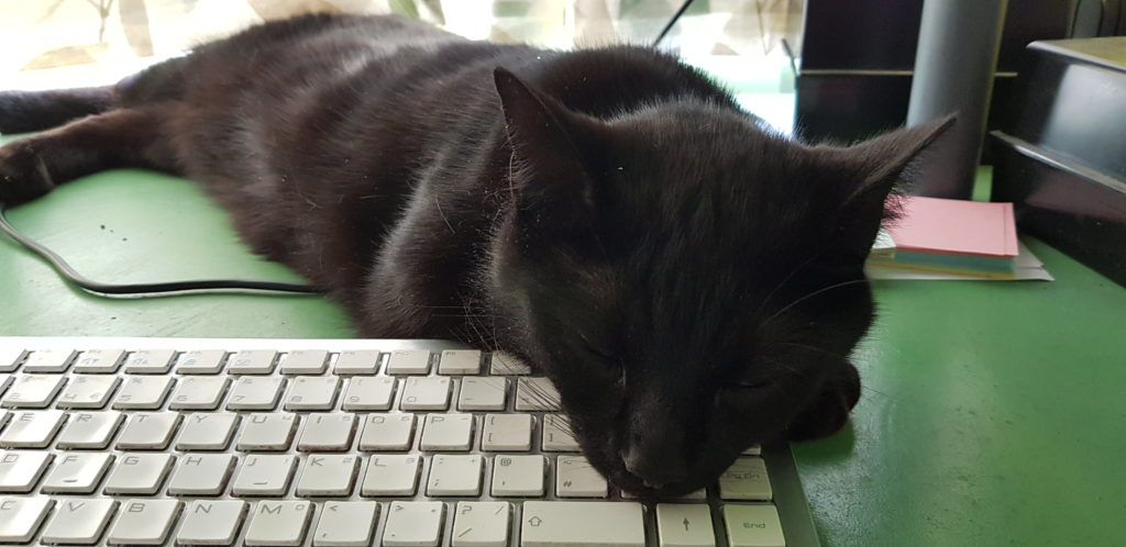 Black cat with his head resting on a keyboard